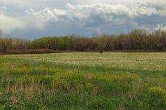 美好的风景在切里克里克公园和水库,丹佛,科罗拉多 免版税库存照片