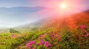 美好的风景在春天山 发烟性小山看法,报道用开花rododendrons 免版税库存图片