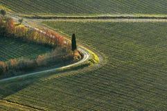 美好的风景在有葡萄园的乡下在托斯卡纳 图库摄影