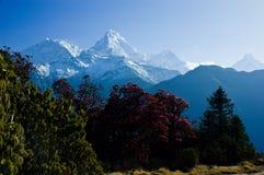 美好的风景在Himalays,安纳布尔纳峰地区,尼泊尔 免版税库存图片