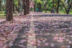 美好的风景视图在秋天在走道下落的季节性桃红色花围拢与绿色树在公园 免版税图库摄影