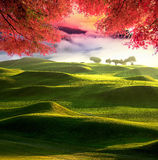 美好的风景,台湾的图象 免版税库存照片