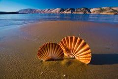 美好的风景,在海滩的壳在克罗地亚 免版税库存照片