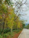 美好的风景-秋天 库存图片