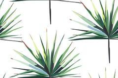 美好的鲜绿色的热带美妙的夏威夷花卉草本夏天水平的无缝的样式的棕榈导航例证 向量例证