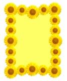 美好的黄色向日葵框架 免版税库存图片