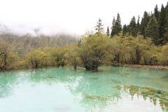 美好的黄龙自然保护在中国的四川 免版税图库摄影