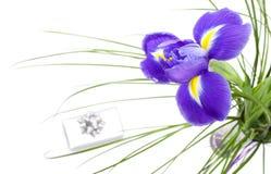 美好的黑暗的花虹膜紫色 库存图片