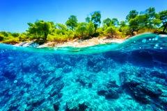 美好的水下的自然 免版税库存图片