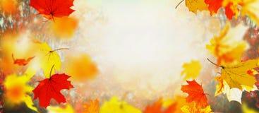 美好的晴天和阳光,室外自然背景的秋天落的叶子 免版税库存图片