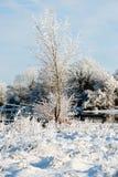 美好的晴天在河的冬天 免版税库存照片