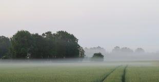 美好的轻的雾和玉米田 库存照片