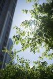 美好的绿色事假和分支有被弄脏的背景和太阳光芒,被过滤的图象,选择聚焦,绿色地方自然在城市 免版税图库摄影