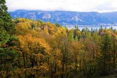 美好的黄色森林秋天在哥伦比亚河峡谷Recreatio 免版税库存图片