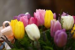 美好的紫色色的郁金香开花背景 库存照片