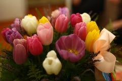 美好的紫色色的郁金香开花背景 免版税库存图片