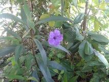 美好的紫色 库存图片