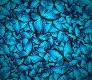 美好的蝴蝶背景 库存图片