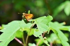 美好的蝴蝶黄色 免版税库存图片