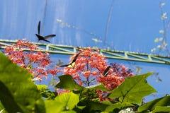 美好的蝴蝶outoodrs在热带巴厘岛,印度尼西亚公园  异乎寻常的蝴蝶 免版税图库摄影