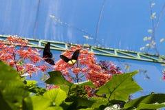 美好的蝴蝶outoodrs在热带巴厘岛,印度尼西亚公园  异乎寻常的蝴蝶 免版税库存照片
