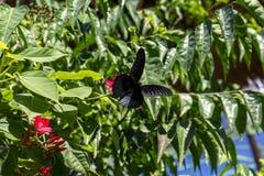 美好的蝴蝶outoodrs在热带巴厘岛,印度尼西亚公园  异乎寻常的蝴蝶 库存照片
