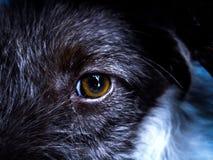 美好的dog& x27; s眼睛 库存图片