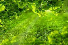 美好的eco绿色defocused春天或夏天背景与阳光 水多的年轻草和叶子在阳光 自然 库存照片