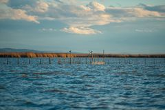 美好的L ` Albufera在日落的湖视图 免版税库存照片