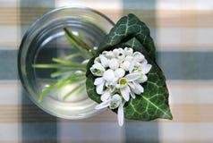 Snowdrops美丽的花束  免版税库存图片