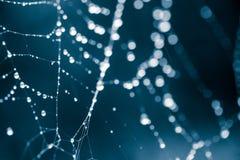 美好,抽象,单色浅景深蜘蛛网的照片与水滴的 库存图片