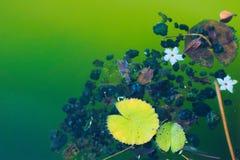 美妙地残骸的五颜六色的收藏在一个池塘` s边缘附近的,在泰国庭院公园 免版税库存图片