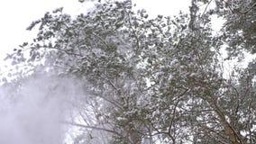 美妙地美好的冬天具球果森林 股票视频