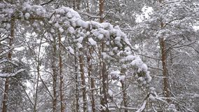 美妙地美好的冬天具球果森林 影视素材