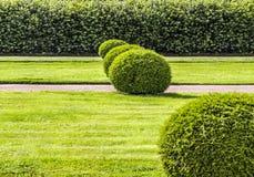 美妙地被修剪的庭院灌木 免版税库存图片