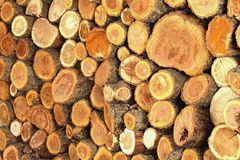 美妙地被折叠的树干 免版税库存图片