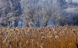 美妙的冬天场面 库存照片