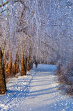美妙的冬天场面 图库摄影