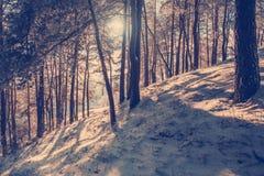 美妙的冬天横向 免版税图库摄影