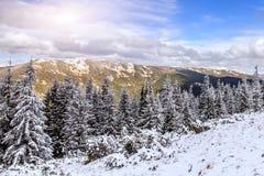 美妙的冬天横向 ammazing的看法 积雪的阿尔卑斯杉木和蓝色完善的天空 库存图片