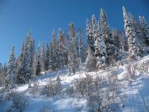 美妙的冬天风景。 库存图片