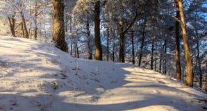 美妙的冬天风景早晨 免版税库存图片