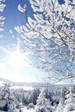 美妙的冬天 免版税库存照片