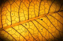 美妙的叶子纹理 库存图片
