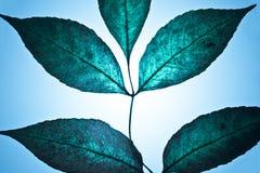 美妙的叶子 免版税图库摄影