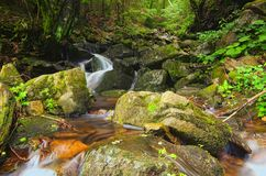 美妙的小的瀑布周围的新鲜的绿色树 夏天风景照片 Zakarpattya,乌克兰 库存图片