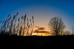 美妙的日出在乡下 树剪影在前景的 免版税库存照片