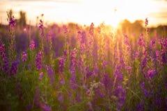 美妙的日落 与蓝色和别针的意想不到的五颜六色的风景 库存图片