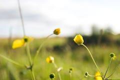 美妙的春天花 图库摄影