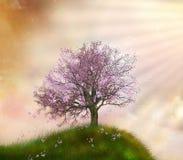 美妙的春天 图库摄影